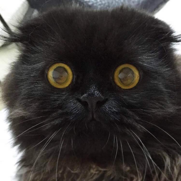 Кот Гимо с милыми глазами - необычные и красивые фото 1