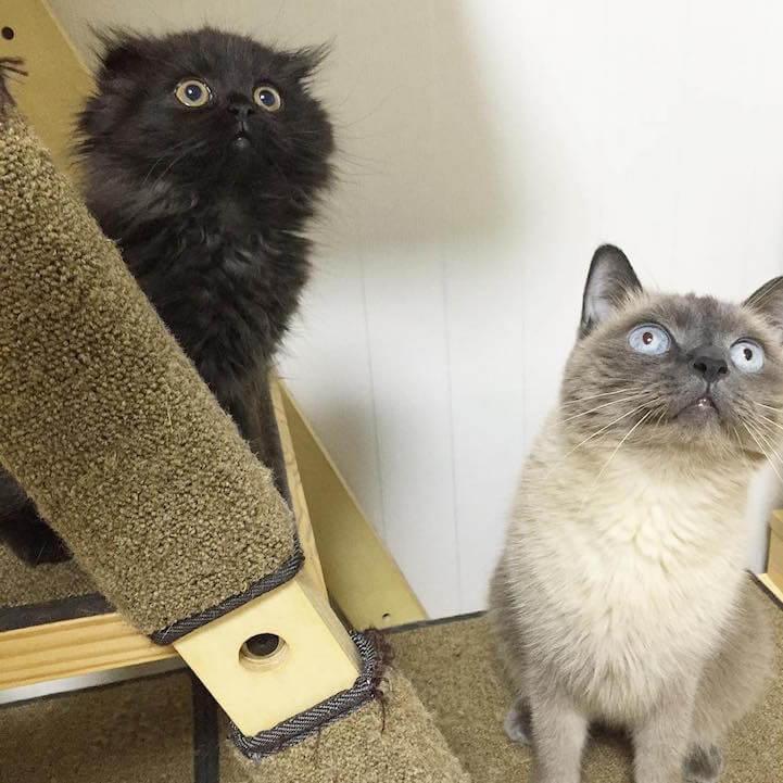 Кот Гимо с милыми глазами - необычные и красивые фото 2