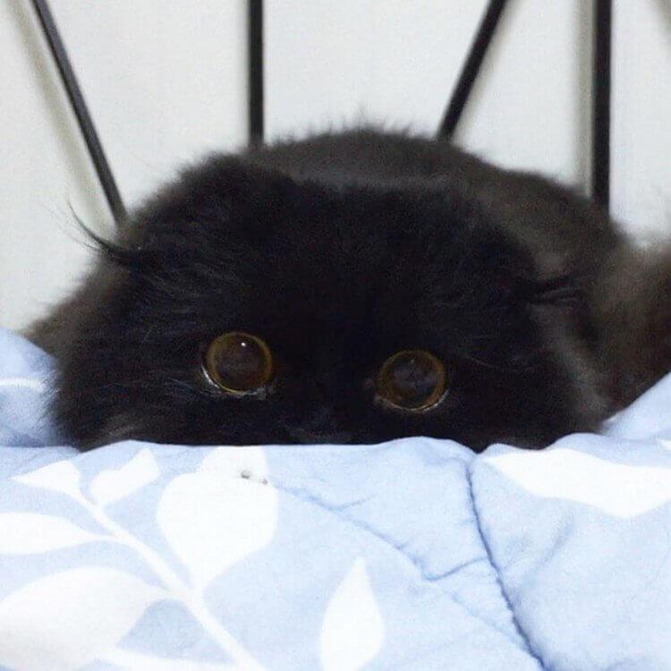 Кот Гимо с милыми глазами - необычные и красивые фото 6