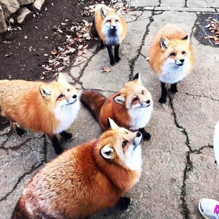 Смешные и веселые картинки лис или про лису - подборка 1