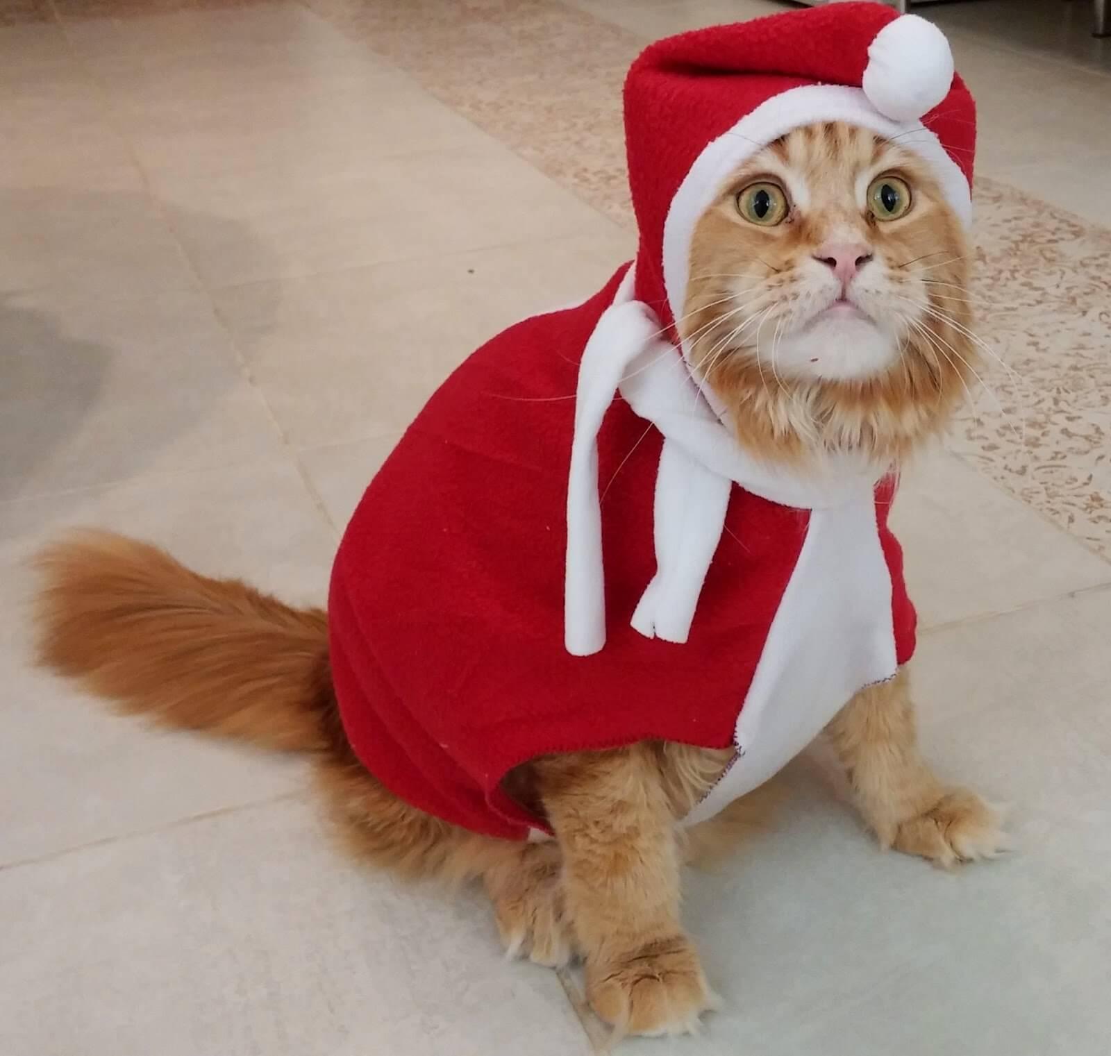 Прикольные и красивые картинки котов в одежде - сборка 5