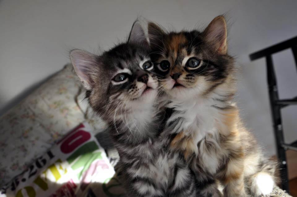Классные и прикольные фото котят, котиков - подборка за 2018 год 3