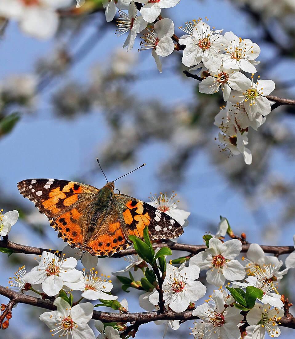"""Красивые картинки и фото """"Аромат весны"""" - подборка 10"""