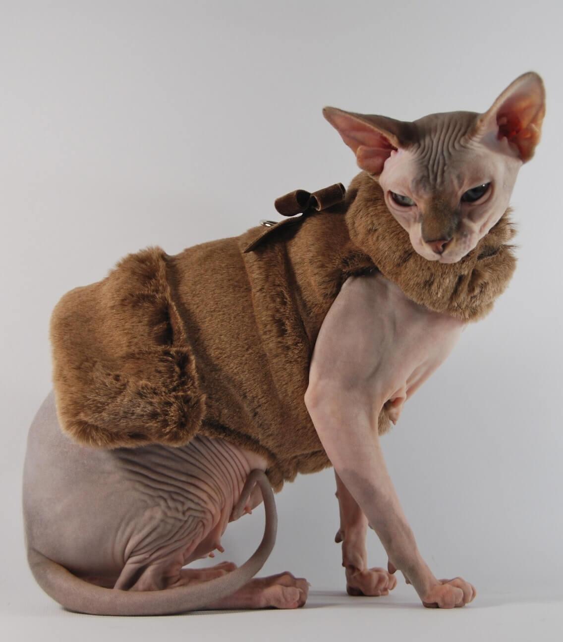 Прикольные и красивые картинки котов в одежде - сборка 6