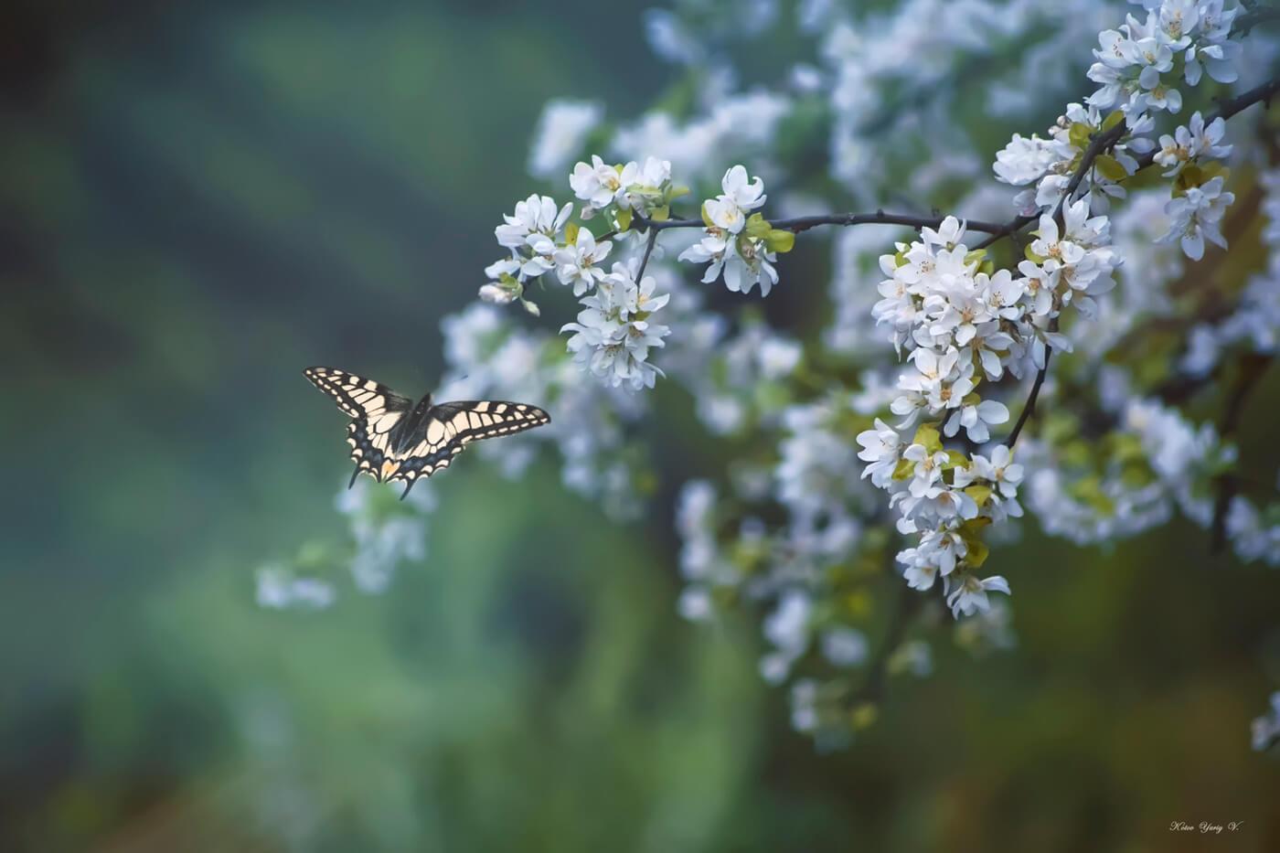 """Красивые картинки и фото """"Аромат весны"""" - подборка 8"""