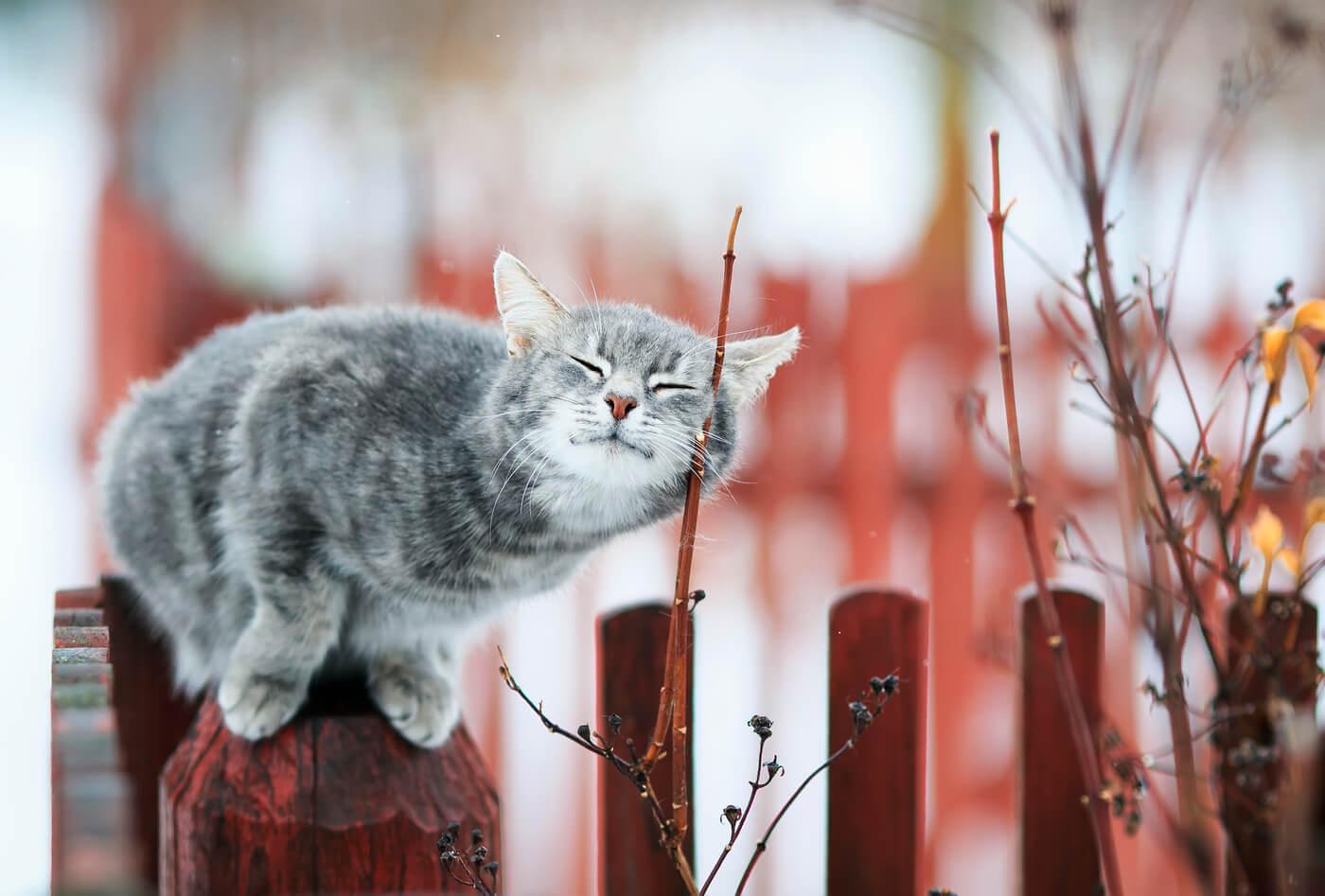 """Красивые картинки и фото """"Аромат весны"""" - подборка 11"""