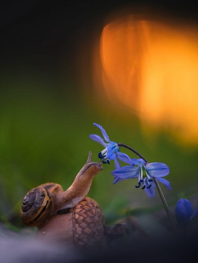 """Красивые картинки и фото """"Аромат весны"""" - подборка 12"""