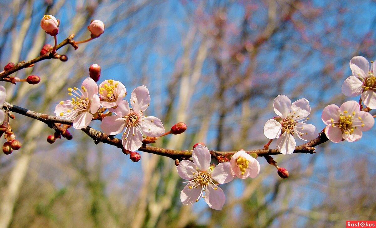 """Красивые картинки и фото """"Аромат весны"""" - подборка 3"""