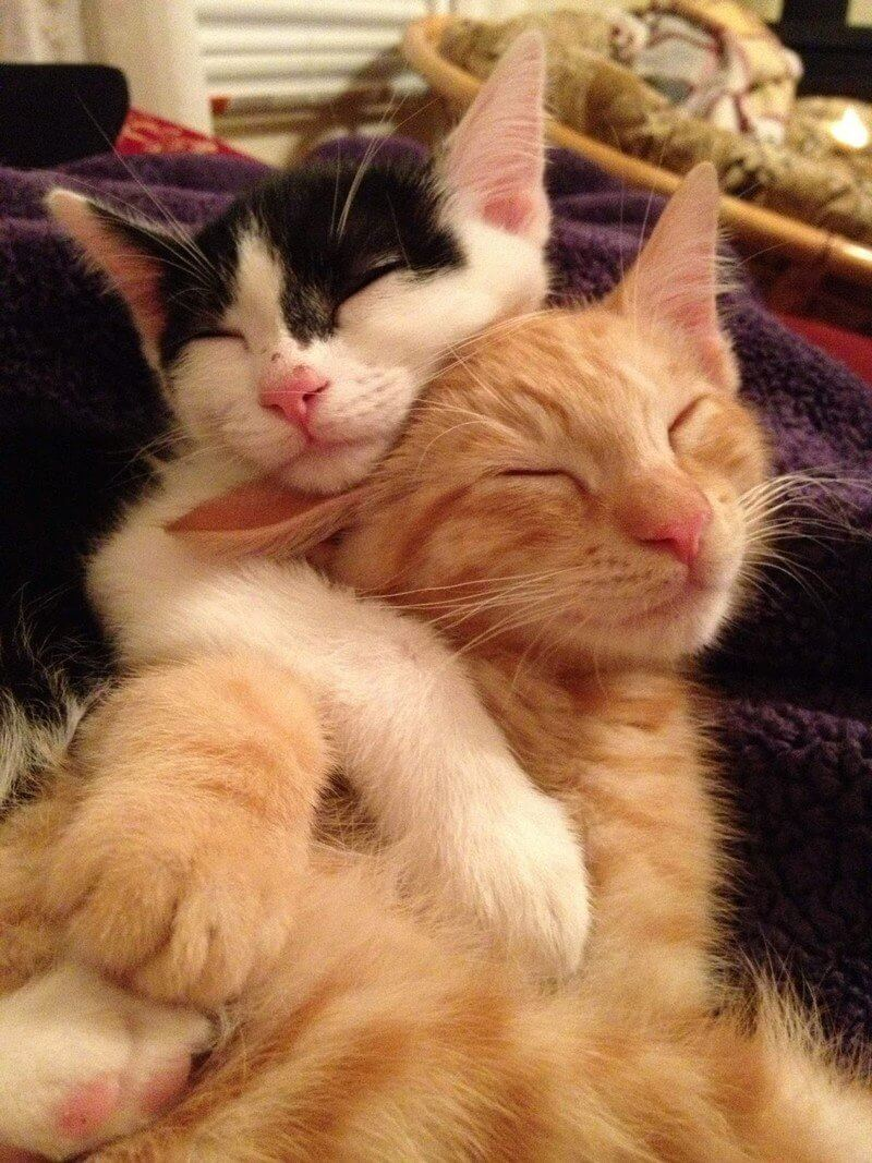 Классные и прикольные фото котят, котиков - подборка за 2018 год 4