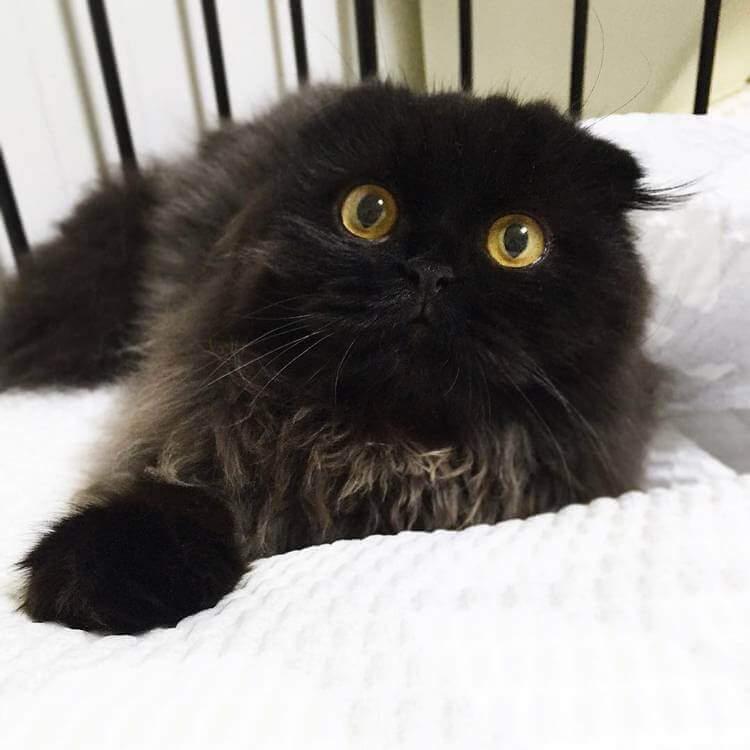 Кот Гимо с милыми глазами - необычные и красивые фото 3