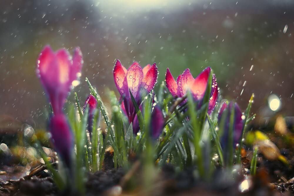 """Красивые картинки и фото """"Аромат весны"""" - подборка 4"""