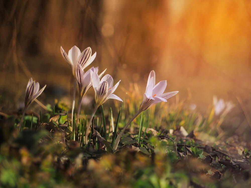 """Красивые картинки и фото """"Аромат весны"""" - подборка 5"""