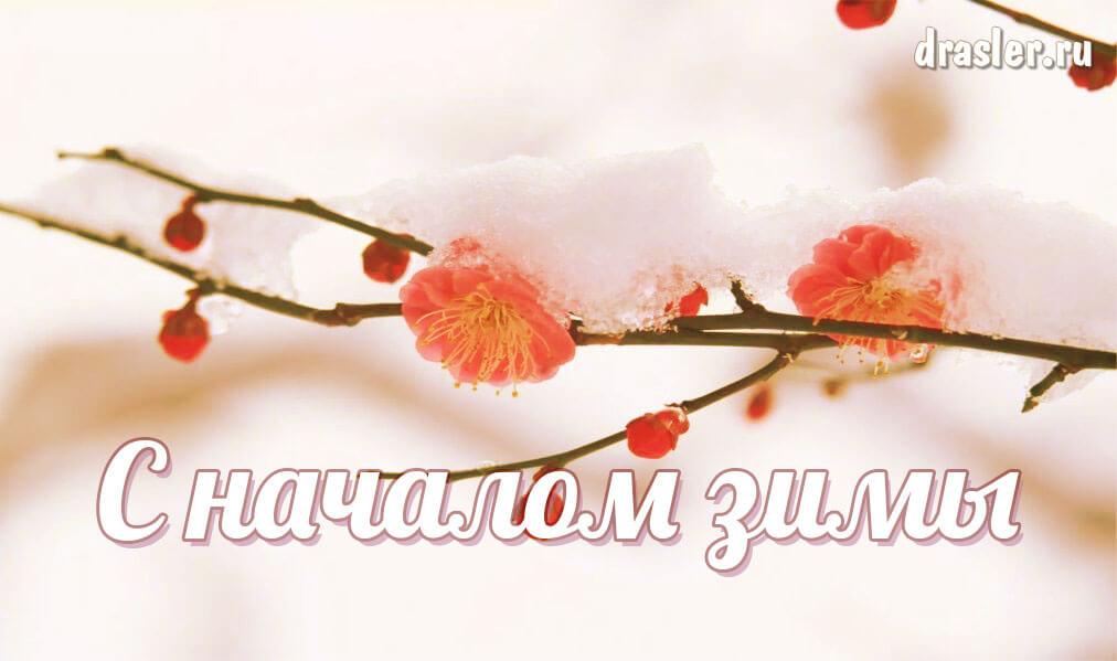 Красивые картинки с началом зимы - пожелания в открытках 5