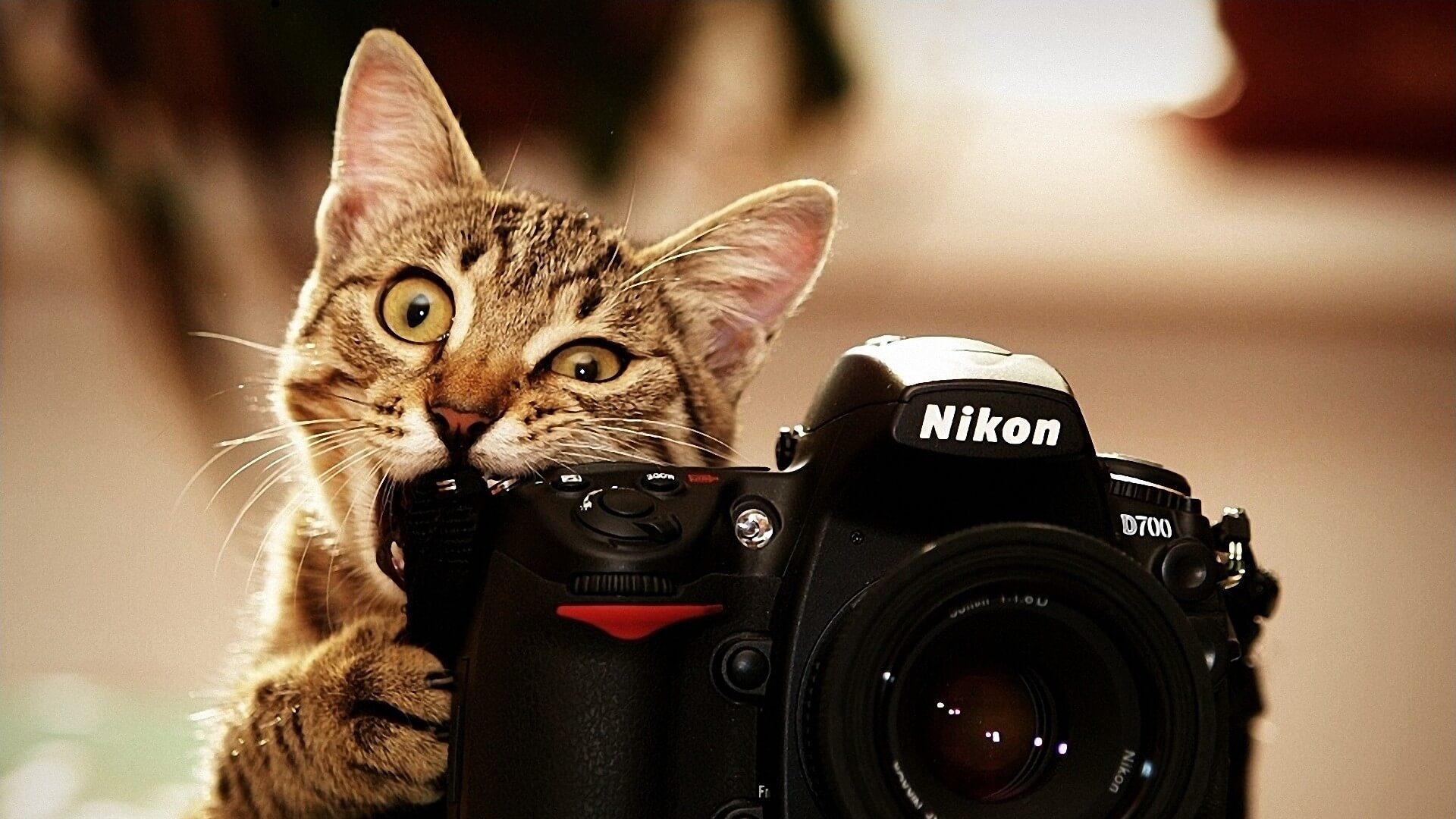 """Красивые картинки и обои """"Камера"""" - подборка изображений 2"""