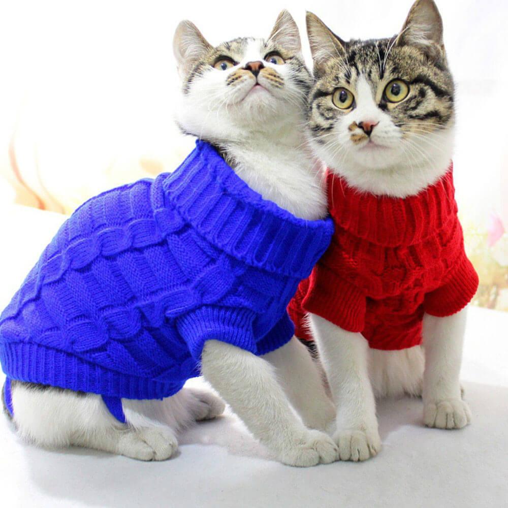 Прикольные и красивые картинки котов в одежде - сборка 17