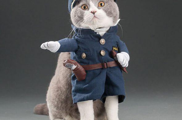 Прикольные и красивые картинки котов в одежде - сборка 18
