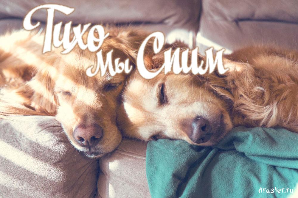 """Прикольные картинки, открытки """"Тихо, я сплю"""" с надписями 6"""