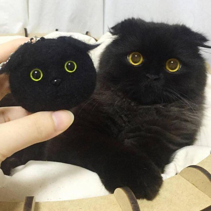 Кот Гимо с милыми глазами - необычные и красивые фото 9
