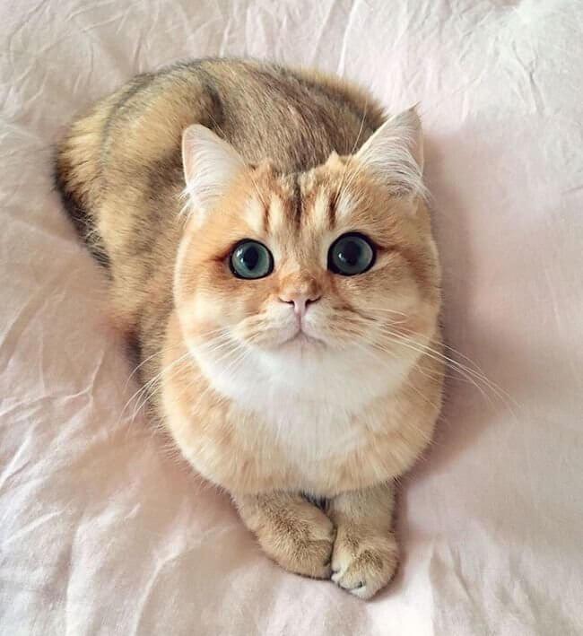 Классные и прикольные фото котят, котиков - подборка за 2018 год 7