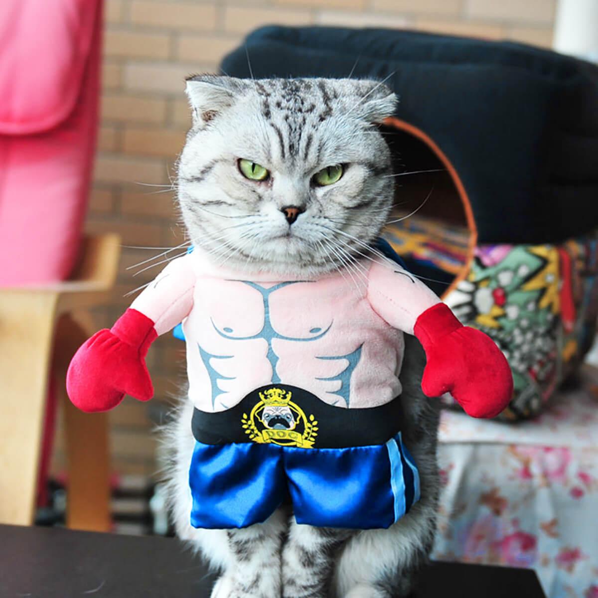 Прикольные и красивые картинки котов в одежде - сборка 12