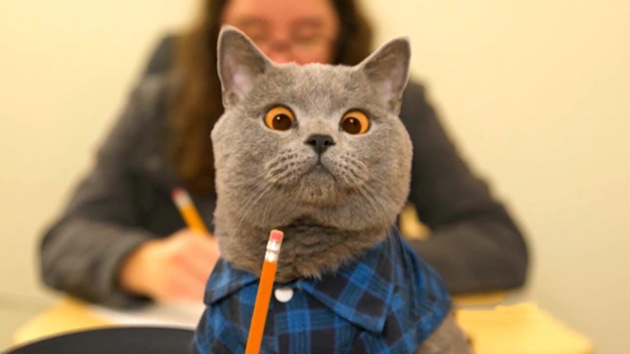 Классные и прикольные фото котят, котиков - подборка за 2018 год 8