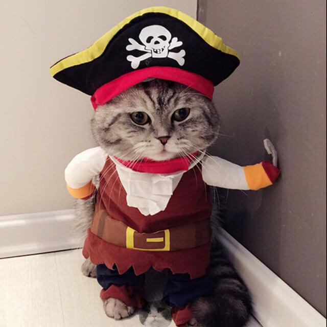 Прикольные и красивые картинки котов в одежде - сборка 13