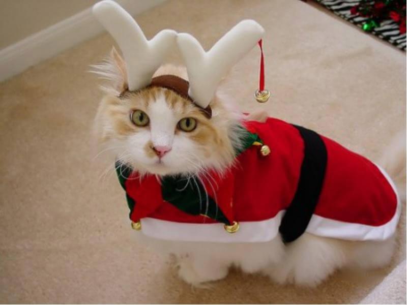 Прикольные и красивые картинки котов в одежде - сборка 16