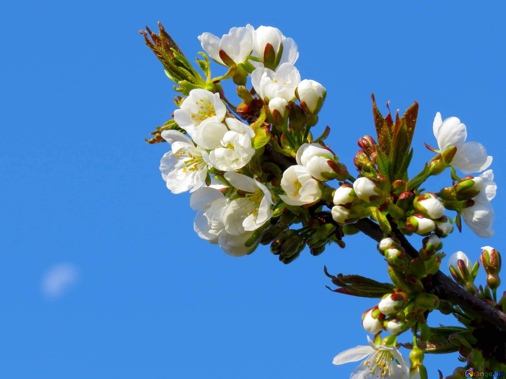 """Красивые картинки и фото """"Аромат весны"""" - подборка 14"""