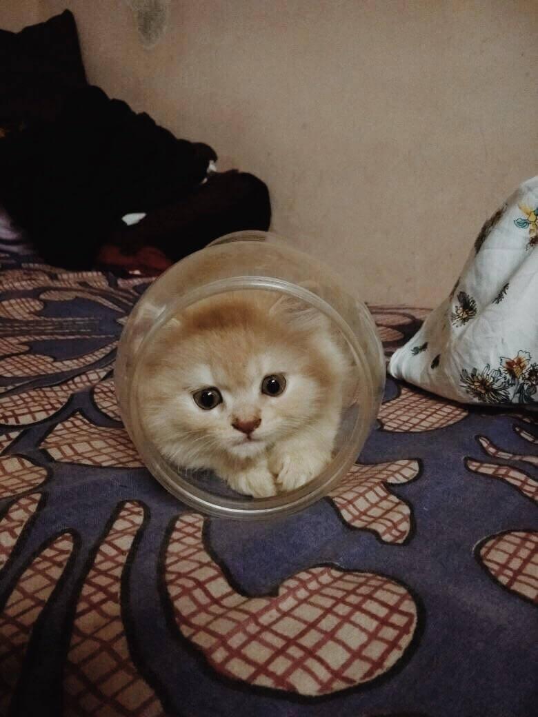 Классные и прикольные фото котят, котиков - подборка за 2018 год 11