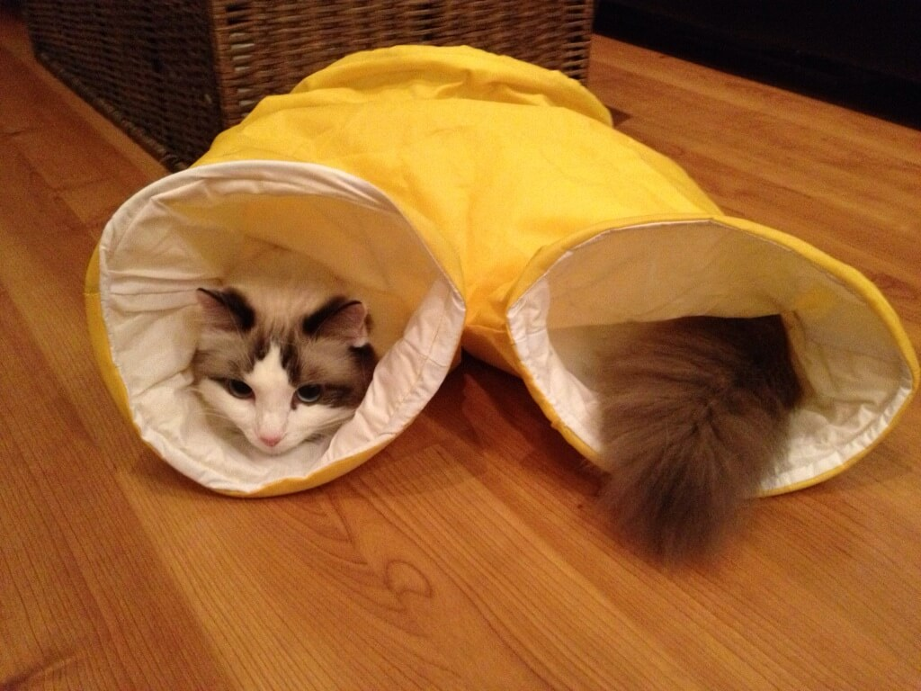 Классные и прикольные фото котят, котиков - подборка за 2018 год 12