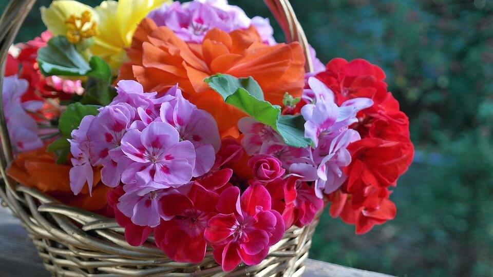 """Красивые картинки и фотографии """"Корзина цветов"""" - подборка 13"""
