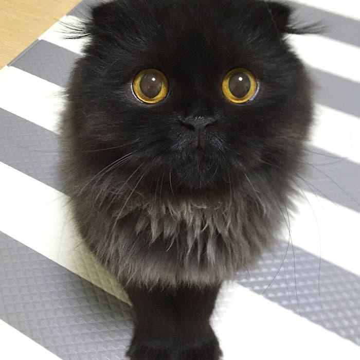 Кот Гимо с милыми глазами - необычные и красивые фото 12