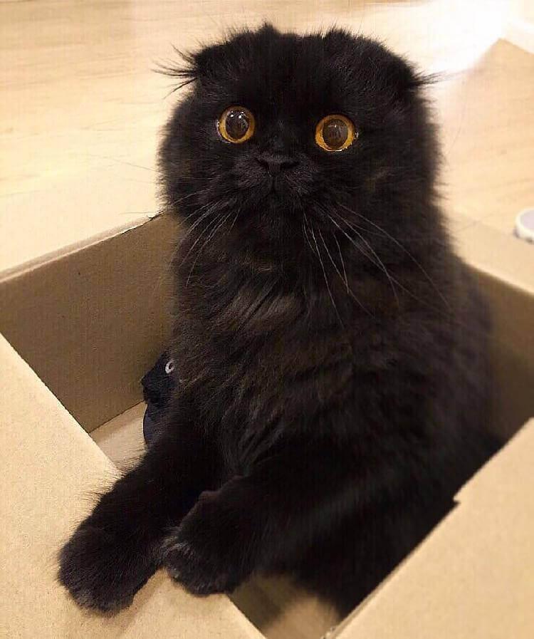 Кот Гимо с милыми глазами - необычные и красивые фото 14