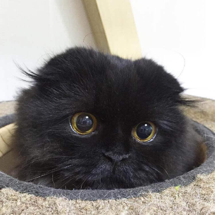 Кот Гимо с милыми глазами - необычные и красивые фото 13