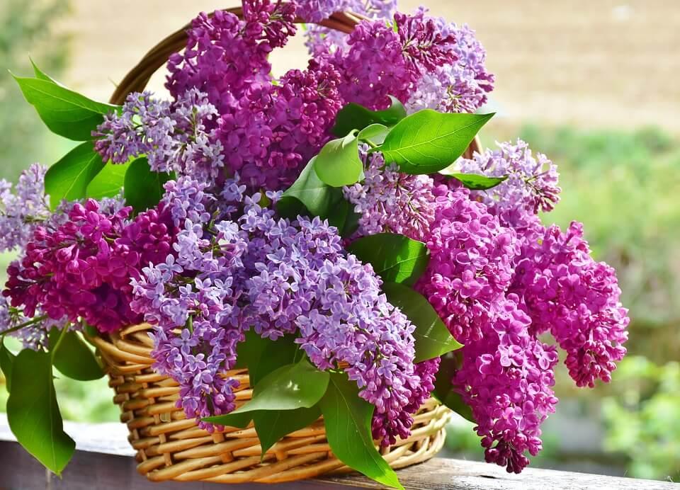 """Красивые картинки и фотографии """"Корзина цветов"""" - подборка 16"""
