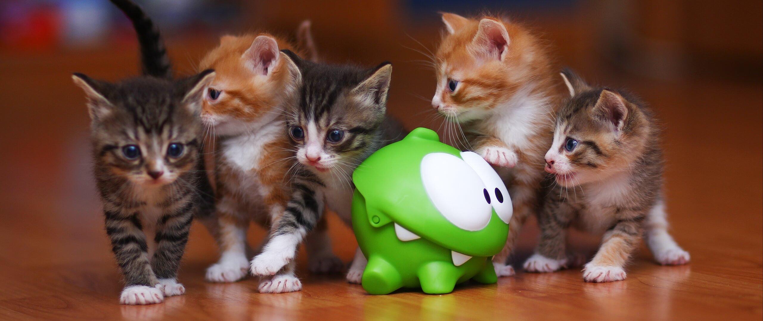 Классные и прикольные фото котят, котиков - подборка за 2018 год 15
