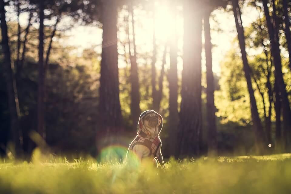 Необычные фотографии собак мопсов - самые классные 10