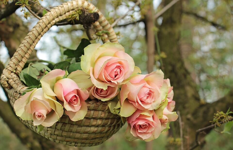 """Красивые картинки и фотографии """"Корзина цветов"""" - подборка 20"""