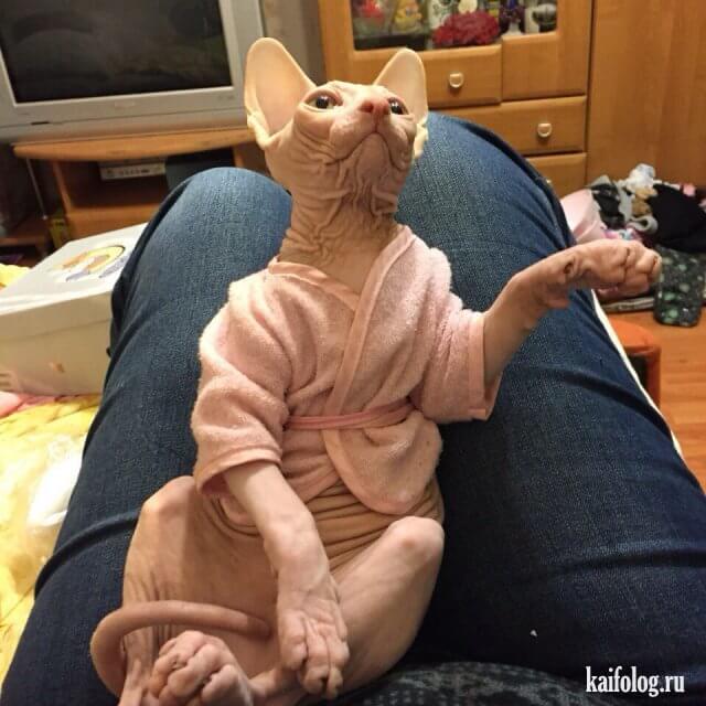 Классные и прикольные фото котят, котиков - подборка за 2018 год 17