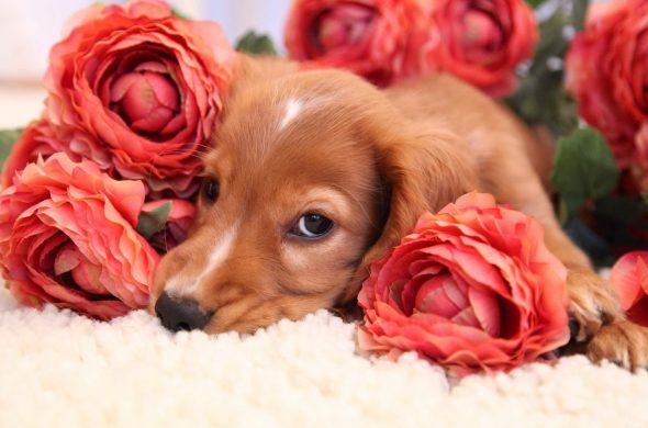 Красивые картинки с животными и цветами - самые интересные 19