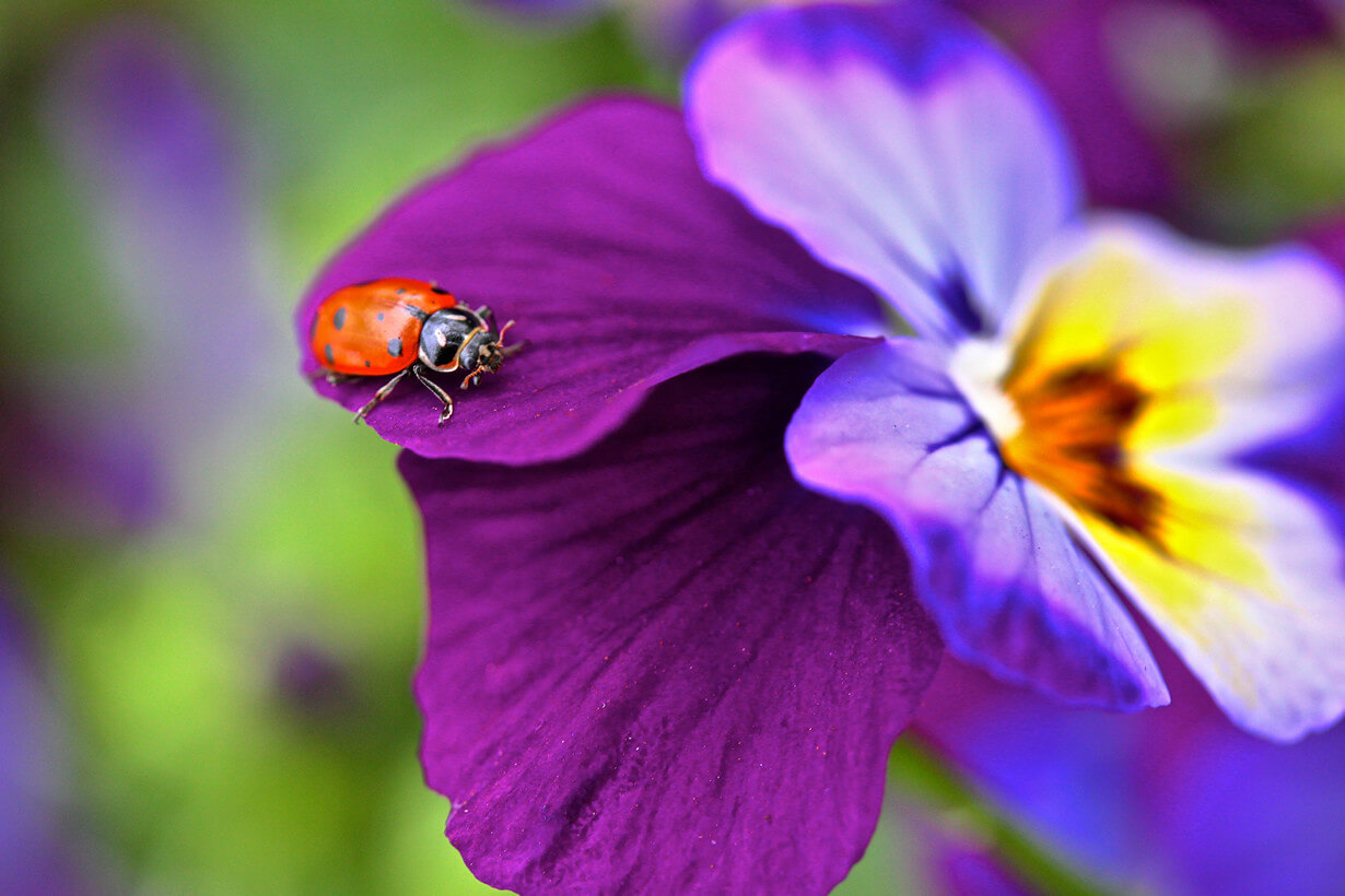 """Красивые картинки и фото """"Аромат весны"""" - подборка 15"""