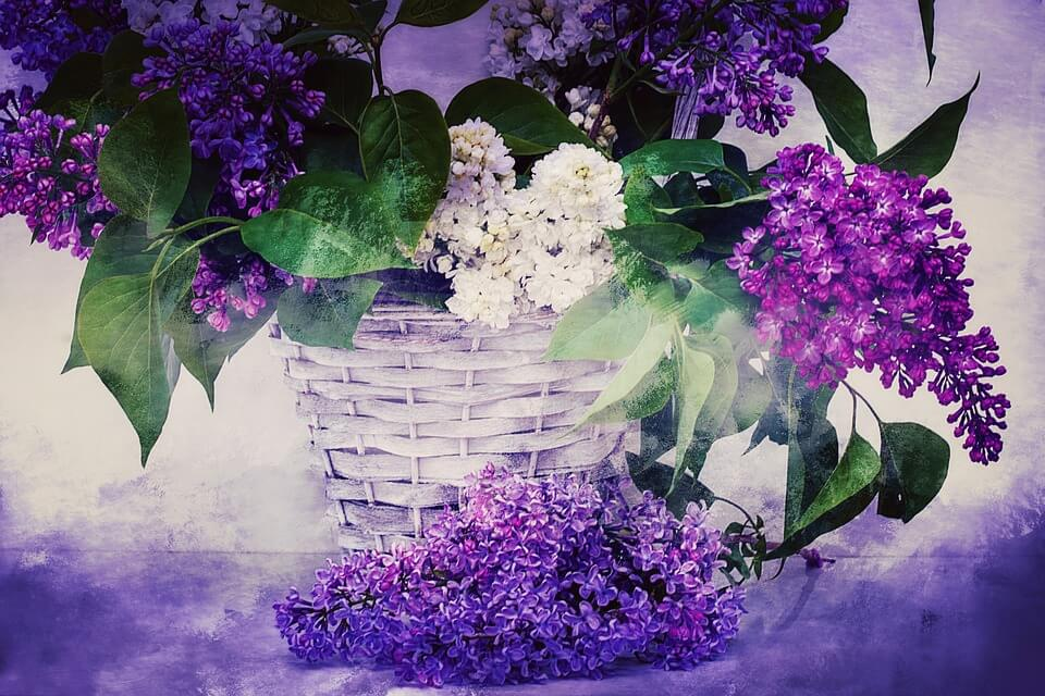 """Красивые картинки и фотографии """"Корзина цветов"""" - подборка 22"""
