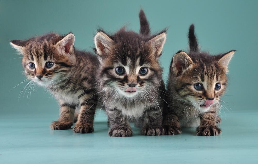 Классные и прикольные фото котят, котиков - подборка за 2018 год 18