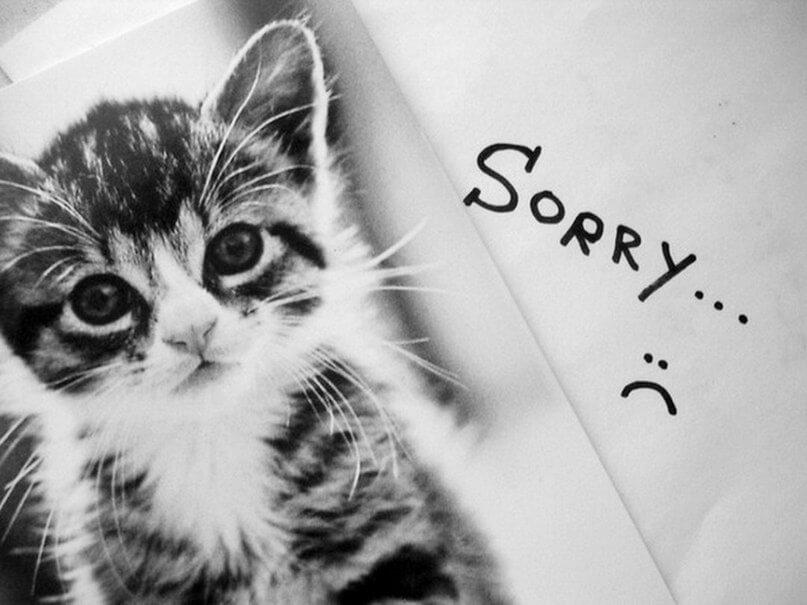 """Скачать картинки """"Прости меня"""" - самые трогательные 14"""