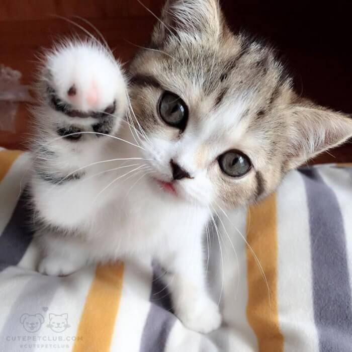 Классные и прикольные фото котят, котиков - подборка за 2018 год 19