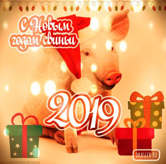Красивые картинки с Новым годом свиньи 2019 - поздравления 23