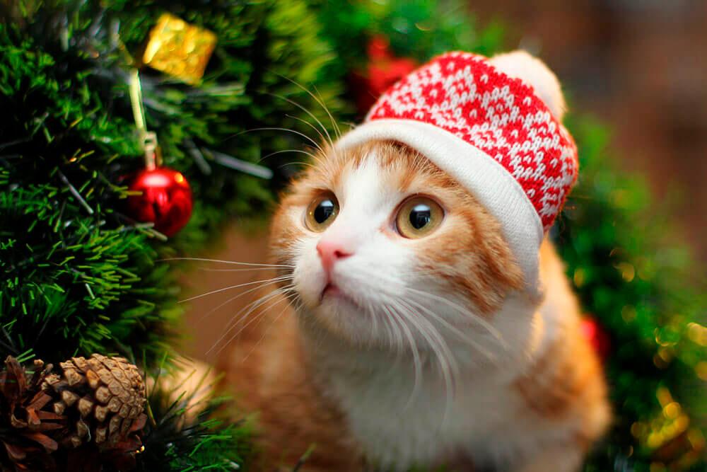 Кошки, котята, коты картинки в новый год - самые красивые 1