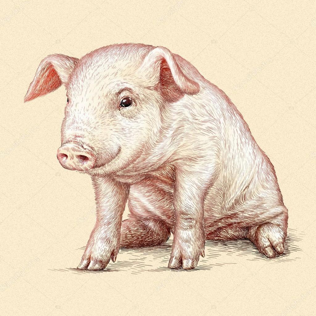 Прикольные картинки свиньи для срисовки - подборка 1
