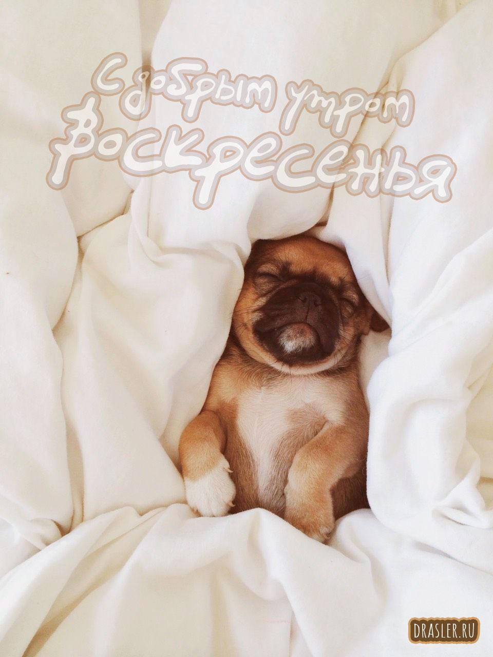 С добрым утром воскресенья - красивые картинки, открытки 2