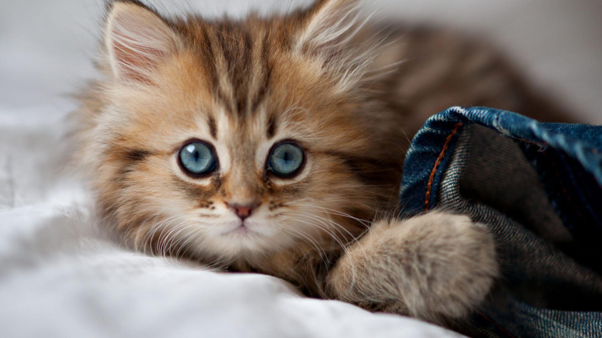 Подборка милых котов и кошек в картинках 2